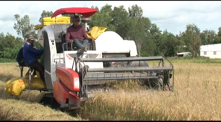 Kiên Lương thu hoạch lúa hè thu
