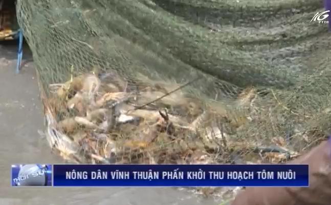 Nông dân Vĩnh Thuận phấn khởi thu hoạch tôm nuôi