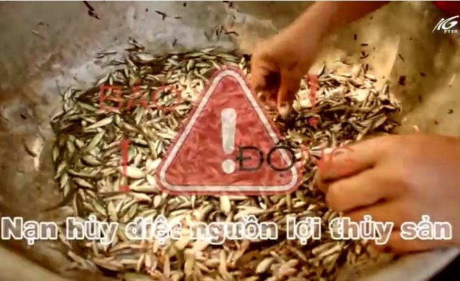 Báo động nạn hủy diệt nguồn lợi thủy sản