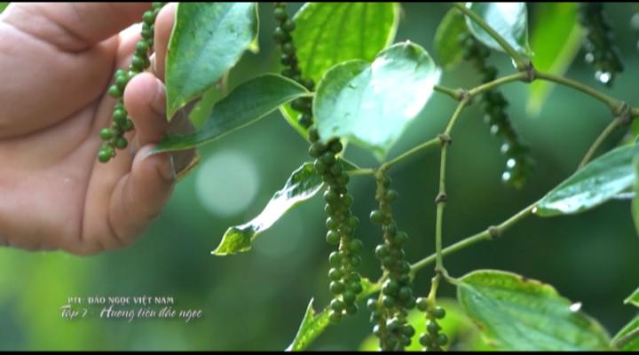 Đảo ngọc Việt Nam (Tập 7)