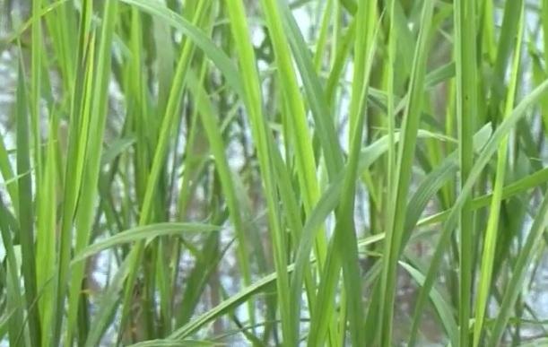 Phát triển nông nghiệp tập thể ở vùng biên