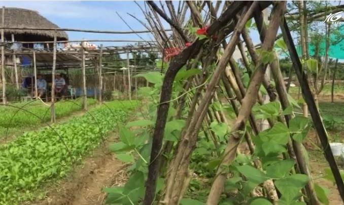 Ông nông dân đi quốc tế nói chuyện trồng rau sạch