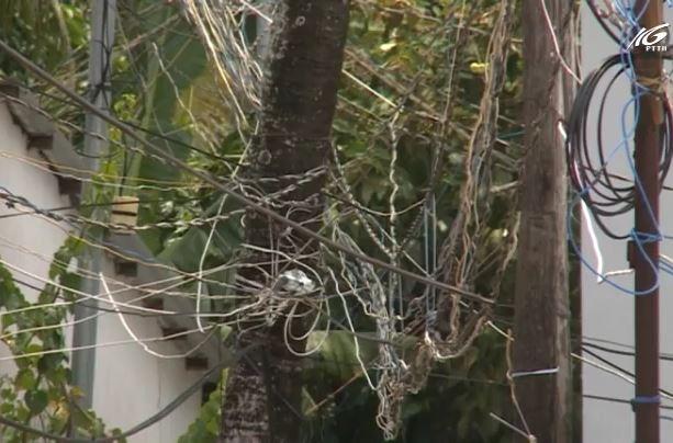 Dân ở Dương Đông kéo điện mất an toàn
