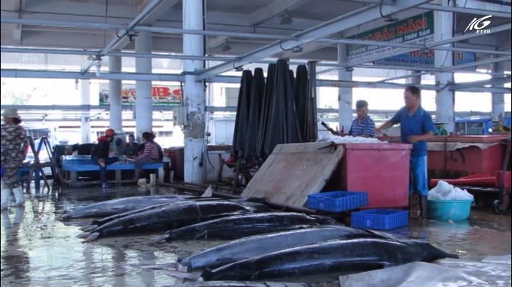 Câu cá ngừ đại dương, cả tháng chỉ được 4-5 con