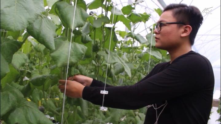 9X bỏ du học Mỹ làm chủ nông trại dưa lưới