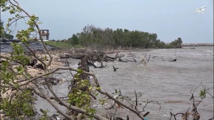 Nhiều đoạn đê biển ở Cà Mau bị sạt lở nghiêm trọng
