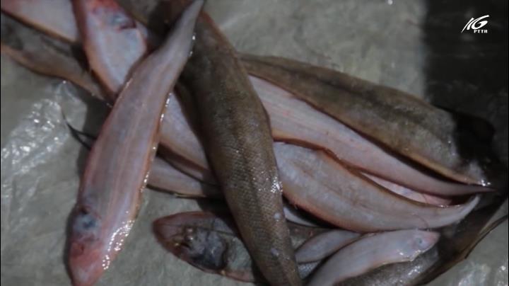 Mắm cá lưỡi trâu
