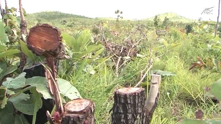 Mua bán đất rừng trái phép diễn ra phức tạp