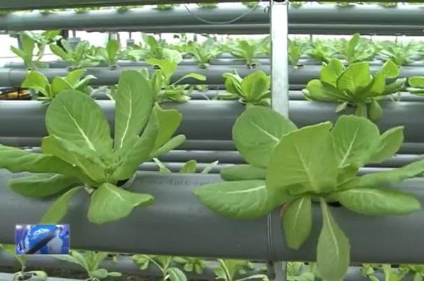 Nông dân tiếp cận công nghệ cao