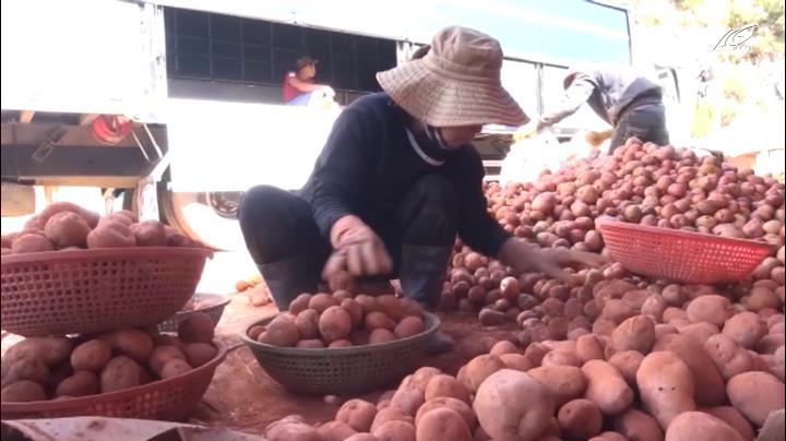 """Mua bán nông sản Trung Quốc gắn """"mác"""" hàng Đà Lạt"""