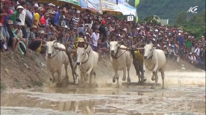 Công phu độ bò đua Bảy Núi