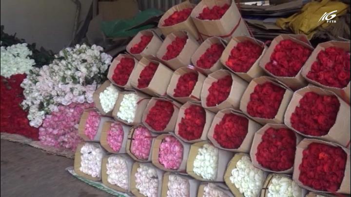 Giá hoa hồng Đà Lạt tăng gấp 3 lần