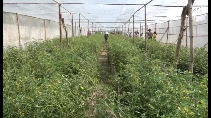 Nông nghiệp nông thôn (26/10/2018)