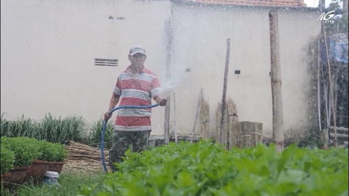 Trồng hoa tết ở Khánh Hoà gặp khó khăn