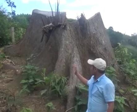 Rừng tự nhiên Trà Đốc bị chặt hạ