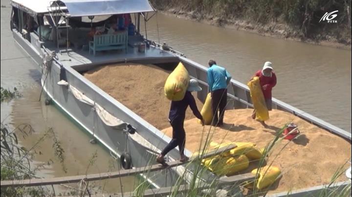 Miền Tây lao đao vì giá lúa giảm mạnh