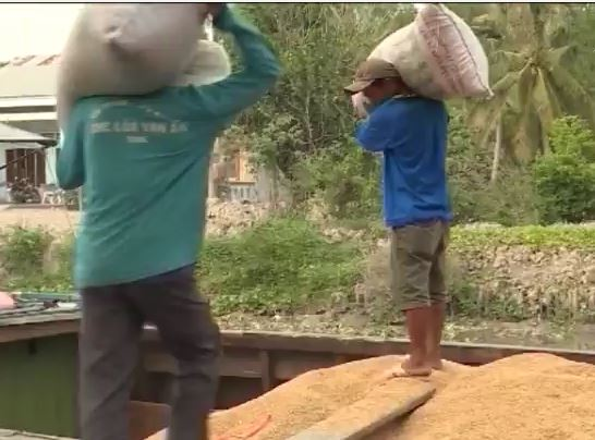 Giá lúa tăng nhưng nông dân vẫn lo lắng