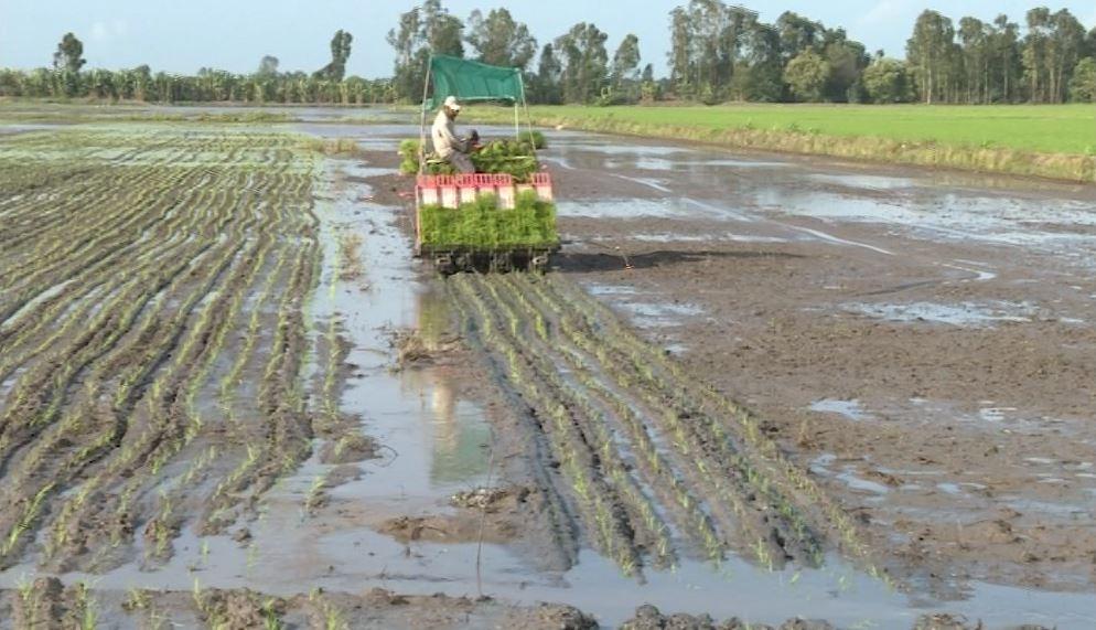 Tân Hiệp: Sản xuất lúa theo địa chỉ