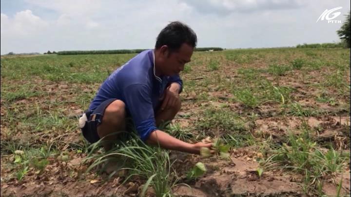 Nông dân thiệt hại nặng do ô nhiễm nguồn nước