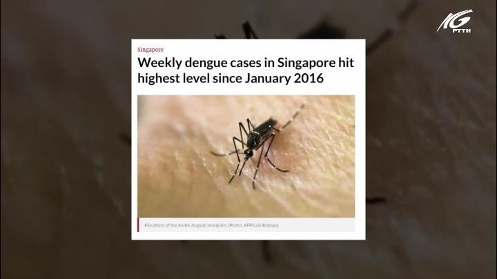 Singapore mắc sốt xuất huyết cao kỷ lục