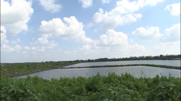 Tiềm năng phát triển nuôi tôm tại huyện Vĩnh Thuận