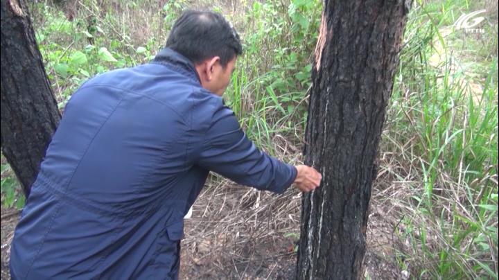Lâm Đồng thanh tra toàn diện việc giao rừng