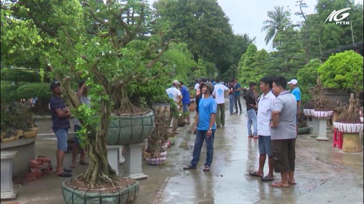 Sa Đéc lần đầu tiên có chợ phiên bonsai