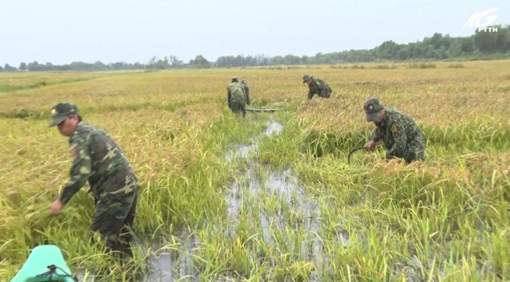 Giang Thành: Giúp dân thu hoạch lúa chạy lũ