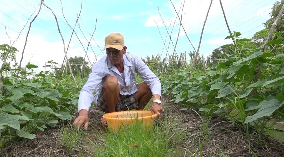 Nông dân Nguyễn Văn Trình làm giàu nhờ chuyển đổi cơ cấu cây trồng