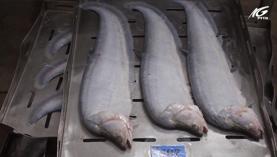 Giá cá thát lát ở mức cao kỷ lục