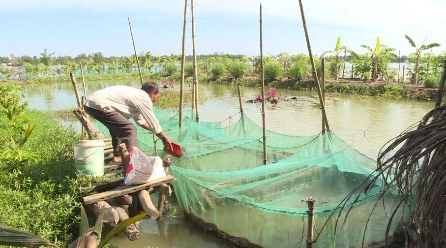 Nông dân ấp Ngã Năm nuôi cá phát triển kinh tế gia đình