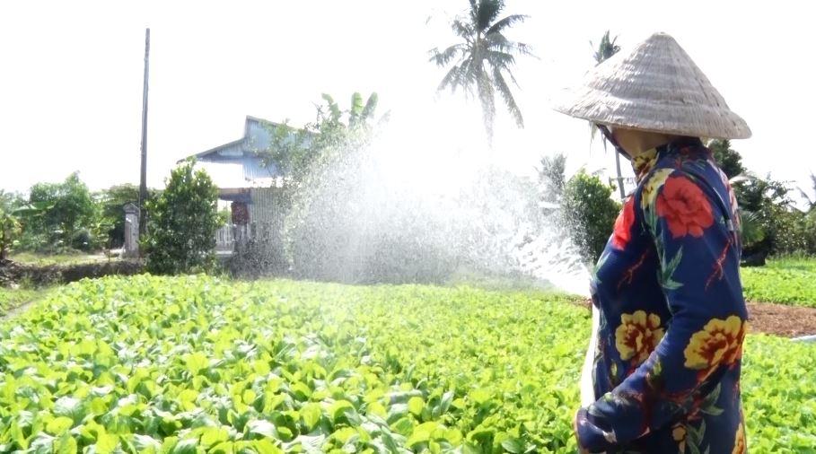 H.An Minh: Mô hình trồng cây ăn trái, rau màu trên đất nhiễm mặn