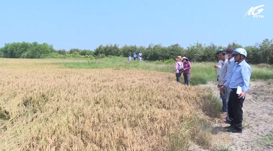 Sở Nông nghiệp kiểm tra tình hình xâm nhập mặn tại Hòn Đất và Kiên Lương
