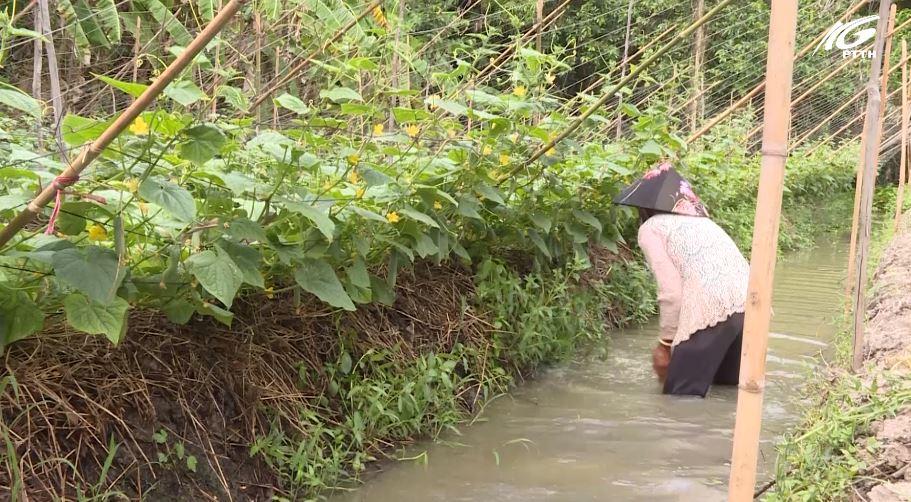 Huyện Giồng Riềng: Vận động nhân dân trồng rau màu mùa hạn