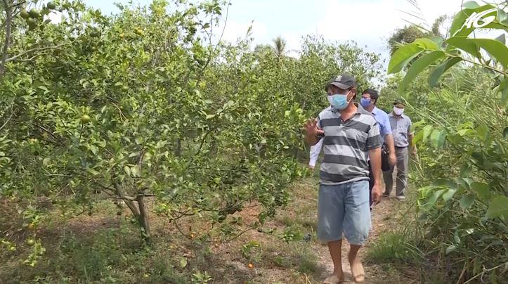 Huyện An Biên: Nông dân trồng cây ăn trái, rau màu thích ứng với biến đổi khí hậu