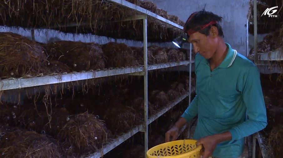 Nông dân Tân Hiệp sản xuất nông nghiệp ứng phó với biến đổi khí hậu