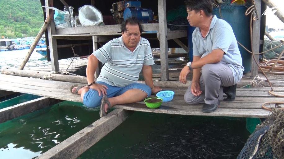 Huyện Kiên Lương: Thu nhập mỗi năm hơn nửa tỷ đồng từ nuôi cá lồng bè