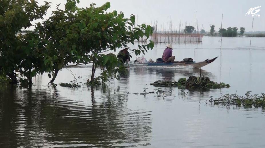 Đánh bắt thủy sản mùa nước nổi