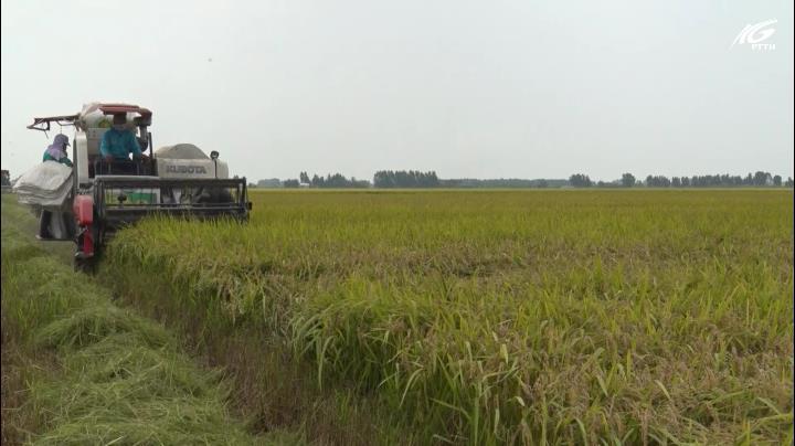 Xuân về trên cánh đồng biên giới Giang Thành