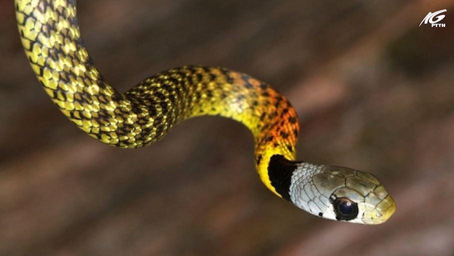 Một bé gái 15 tháng tuổi bị rắn cắn tử vong